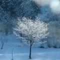 横畑・樹氷