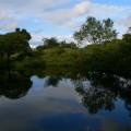 管理棟脇の池