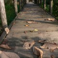 木道の枯葉